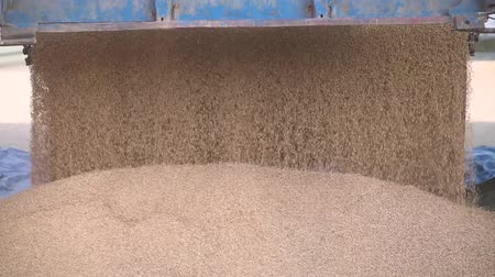 soya : Pouring soy bean grain into tractor trailer after harvest. truck pours summer harvest. Stock video