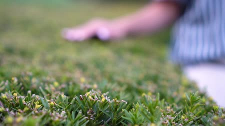 woman holds her hand through the lawn bushes. park in the open air.