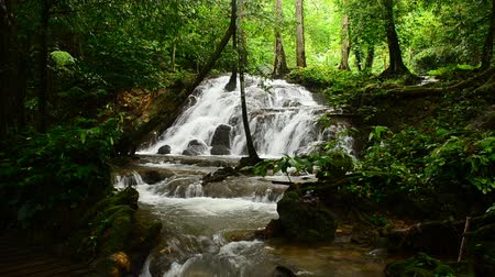 floresta tropical : waterfall in thai national park Thailand