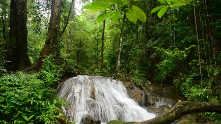 dzsungel : waterfall in thai national park. In the deep forest on mountain