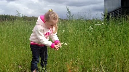 plucks : child plucks a daisy in a field