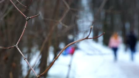 dead wood : view of the people walking around in the winter using a tree branch. Stock Footage