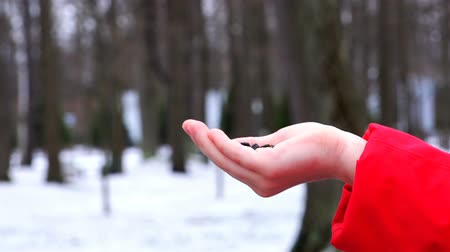 young sparrow : in the Park, winter birds eat seeds from the hand girls. Stock Footage