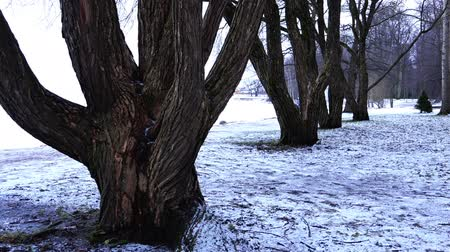 loved : a couple in love walks in a winter Park between bare tree trunks.