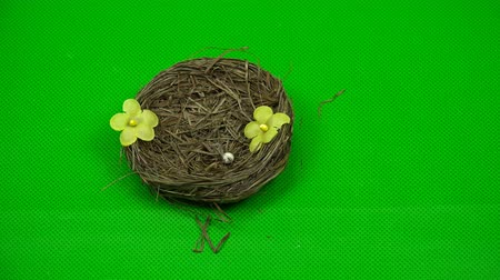 hromakey : hand of a person decorates with flowers nest of a nestling on a green background.