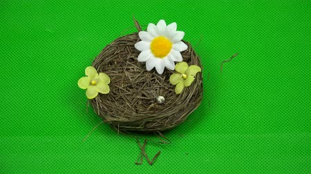 hromakey : The hand removes artificial flowers from the birds nest.