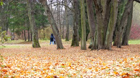 deep autumn : A couple of people breathe the air in the Park with Golden leaves.