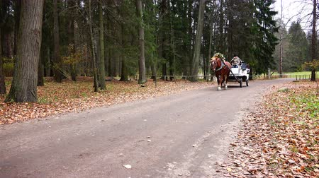 combinado : Russia, Pavlovsk, October 28, 2017 Harnessed horse rides in the Park along the trail