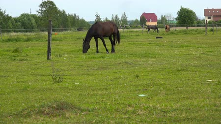 padok : horses are grazing on a green meadow.