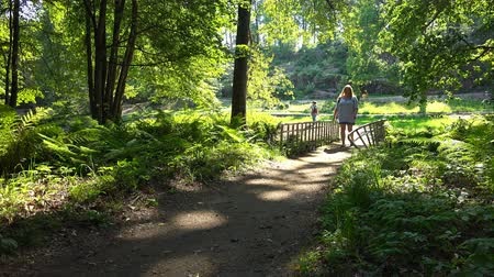 passar : people pass by a small bridge in the park. Stock Footage