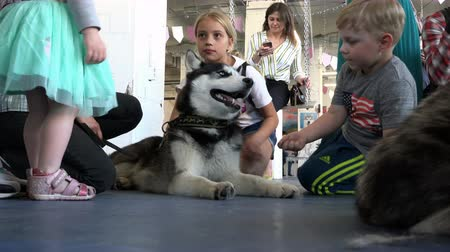 itaat : Russia, June 17, 2018, St. Petersburg young children at a dog show pet husky Stok Video