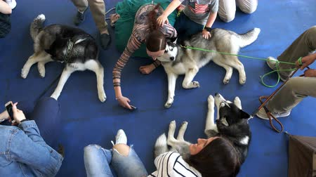 pásztor : Russia, June 17, 2018, St. Petersburg girls are photographed with dogs lying on the floor