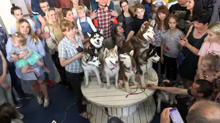 canino : Russia, June 17, 2018, St. Petersburg people are photographed at the Husky Dog Show Vídeos