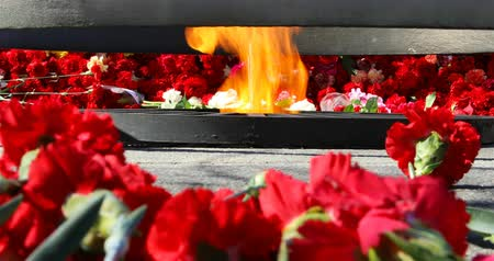 homeland : red carnations lined around the eternal flame.