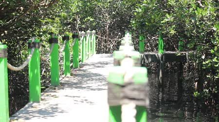 mianmar : Mangrove Estuary in Probolinggo Region, Indonesia Stock Footage