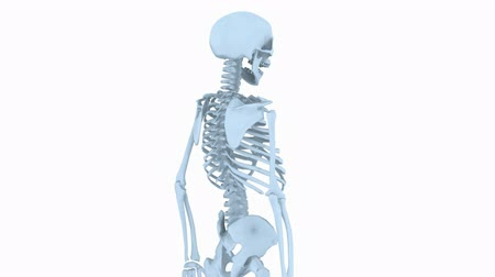 escapula : Rotación de skeleton.skull,anatomy,human,medical,body,biology,medicine,science,bone 3D, Archivo de Video