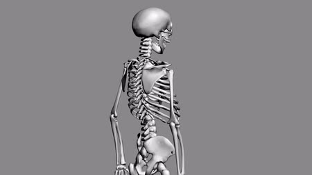 omuzlar : Rotation of 3D skeleton.anatomy,human,medical,body,skull,biology,medicine,science,bone,