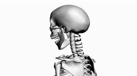 calavera : Rotación de skeleton.anatomy,human,medical,body,skull,biology,medicine,science,bone 3D, Archivo de Video