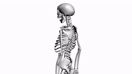 escapula : Rotación de skeleton.anatomy,human,medical,body,skull,biology,medicine,science,bone 3D, Archivo de Video