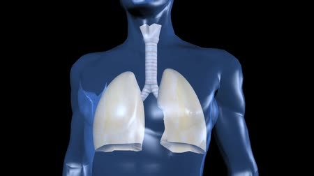 akciğer : human body & breathing lungs.