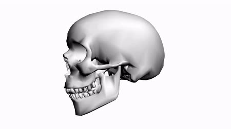 calavera : Rotación de Skull.bone,death,skeleton,illustration,design,dead 3D,