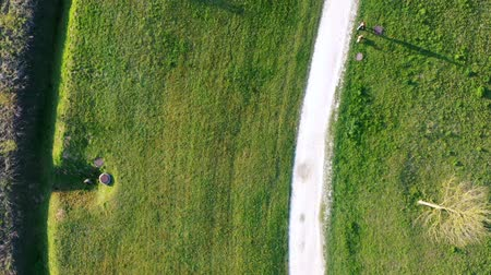 bağ : Aerial view of a young woman walking her small dog in the Park