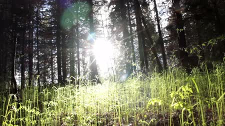 ekologia : Juvenile away in the forest and sun Wideo