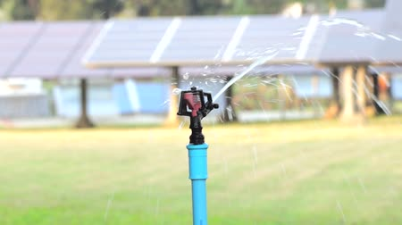сырой : the Sprinkler watering the plants