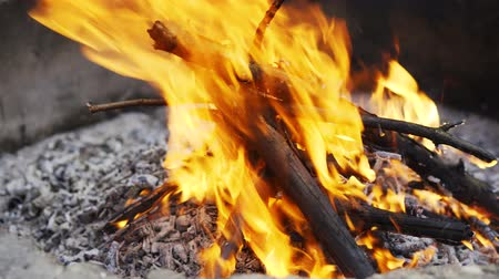 çatırtı : small campfire in a summer pine forest