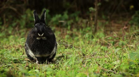 Portrait of cute black rabbit.