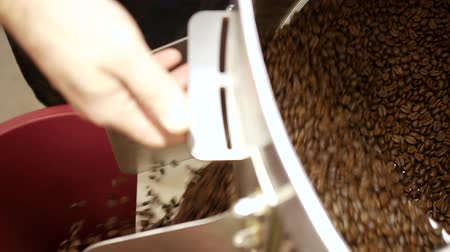 Roasted coffee beans pouring from roaster machine 影像素材