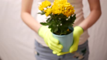 Woman standing against light background with flowers plant in hands. Gardening concept, Shallow DOF