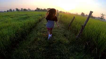 ジャスミン : A girl jogging slow motion in the rice field at sunrise