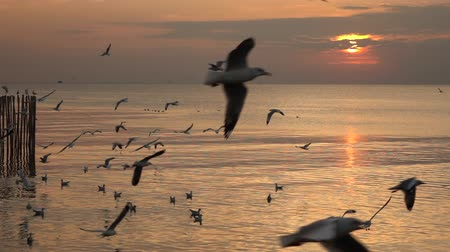 gaivota : Seagull flying on the sea at sunset