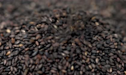sezam : Pouring Black Sesame Seeds, Macro Shot