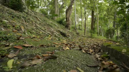 andar : Moving forward with low angle view to the ground in natural park. Vídeos