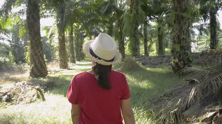 Female planter is taking care the product and walking in oil palm plantation under sunlight. Vídeos