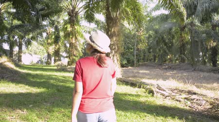видя : Female planter is taking care the product and walking in oil palm plantation under sunlight. Стоковые видеозаписи