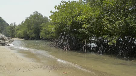 gyertyafa : Mangrove forest growing on the coast with a speed boat during summer in phuket. Stock mozgókép