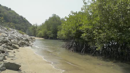 Mangrove forest growing on the coast with a speed boat during summer in phuket. Stock Footage