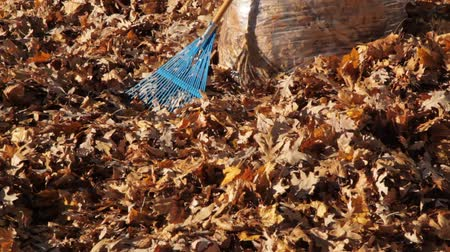 Cleaning up Autum Leaves
