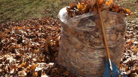 yeşil çimen : Cleaning up Autum Leaves