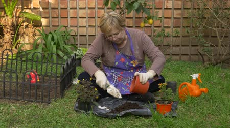 Full shot of an adult woman potting flower plants in her garden Wideo