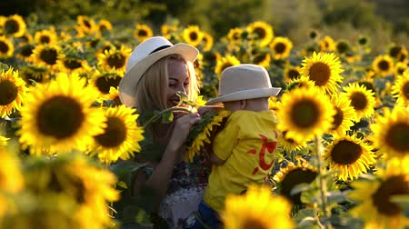 Beautiful mother is tossing up her cute little son in sunflower field. Both are happy. Image with selective focus Стоковые видеозаписи