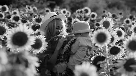 Beautiful mother is tossing up her cute little son in sunflower field. Both are happy. Image with selective focus Vídeos