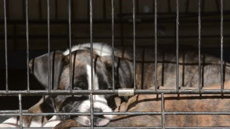 dog pound : Small dogs in animal shelter closeup footage