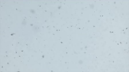 gevreği : Fluffy snowflakes falling from the sky slow motion from 120fps