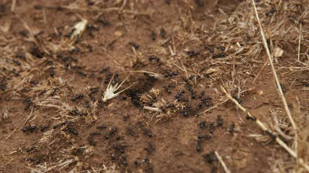eye piece : Crawling ants after rain on the soil