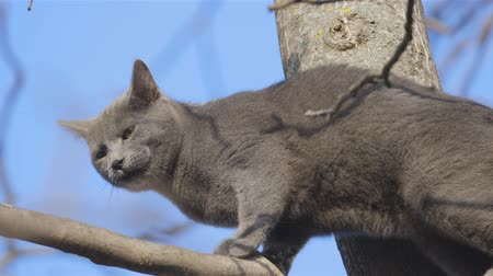 kotki : Helpless cat on the top of tree