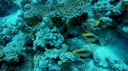 fuzileiros navais : Coral Reef under water slow motion footage Vídeos